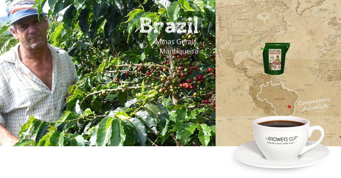 Kava iš Brazilijos